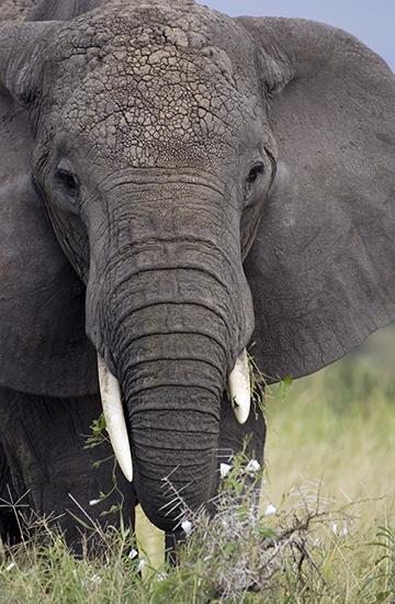 an elephant standing
