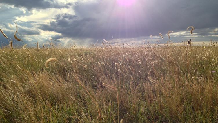 Shortgrass steppe plains of eastern Colorado