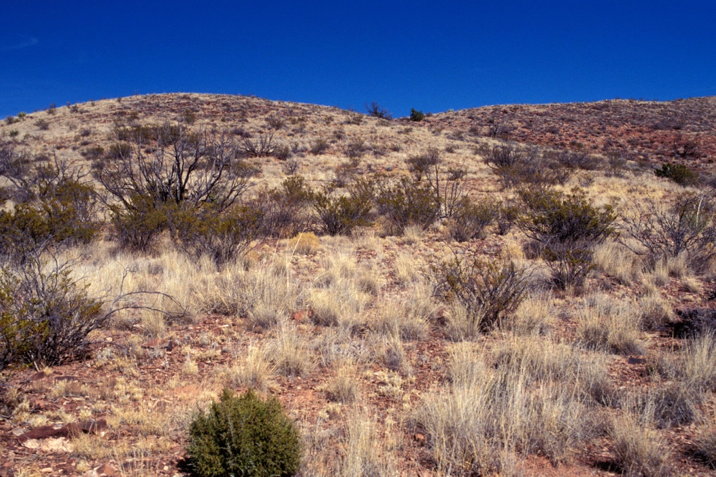A hillside with many shrubs