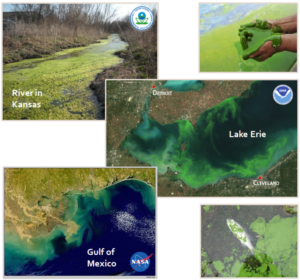 Picture collage of satellite images showing excessive algae growth in bodies of water