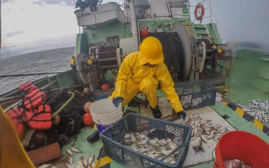 Fisherman sorting fish on a boat