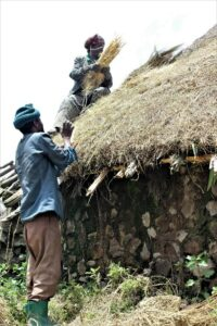 Ethiopians placing guassa grass as roof thatch material