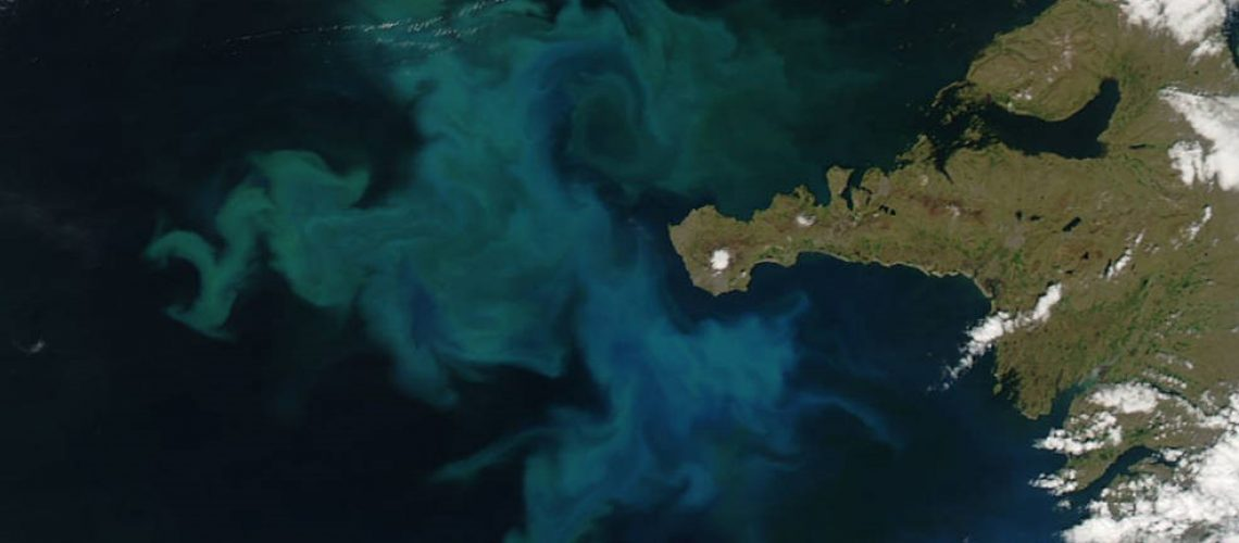 Satellite picture of a Phytoplankton bloom along the coast of Iceland.
