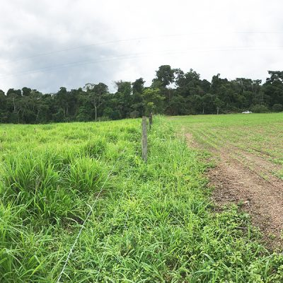 image of Amazonian pasture and farmland