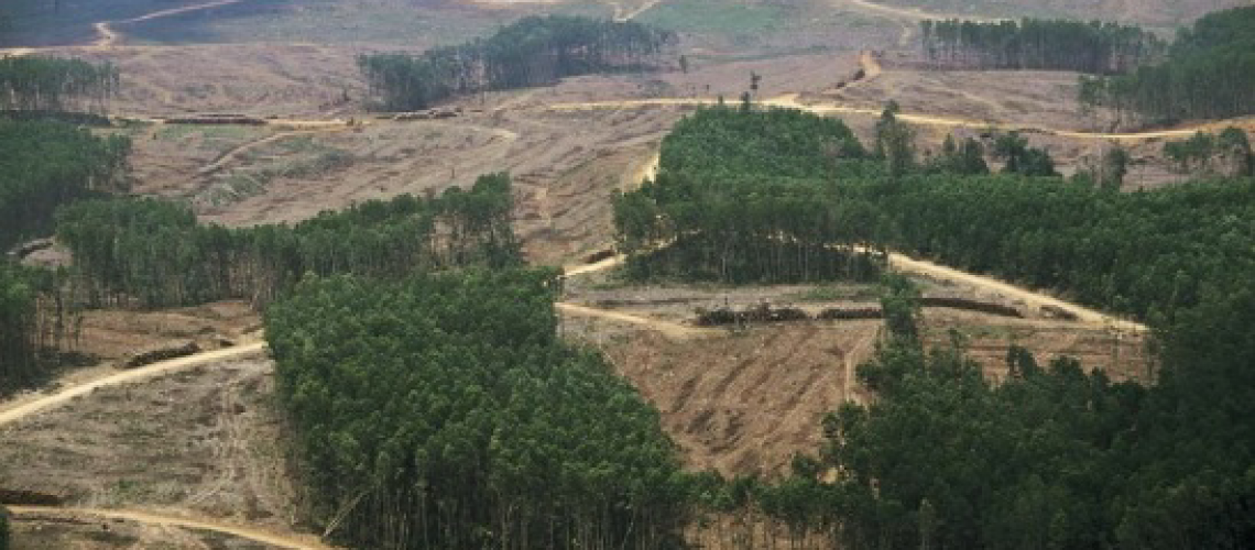 Forests being cut for agricultural land