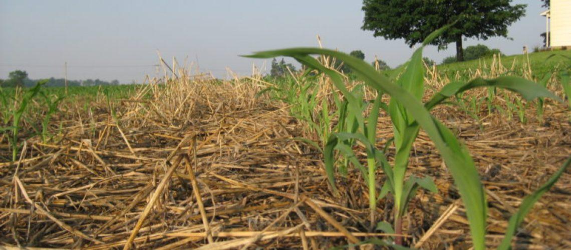 Source: https://regenerationinternational.org/2016/06/20/cover-crops-build-soil/
