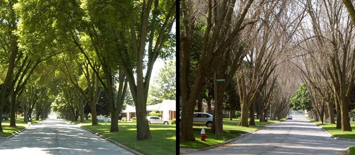 Two pictures side by side of living trees lining a street followed by dead trees lining the same street.